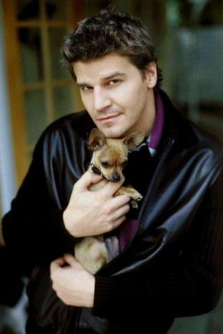 David Boreanaz height and weight